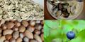 7 loại thực phẩm giúp giảm cholesterol